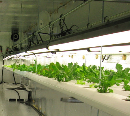Grow room with hydroponics, grow lights, and fans.