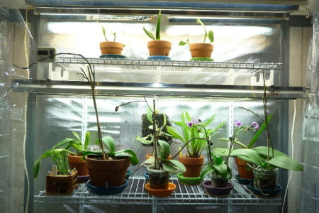 Indoor grow room with multiple plants in containers.