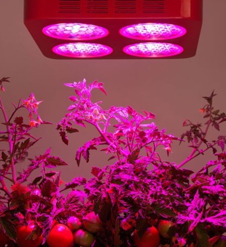 LED grow light coverage for tomato plants.