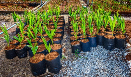 Plants growing in coco coir in a container garden.