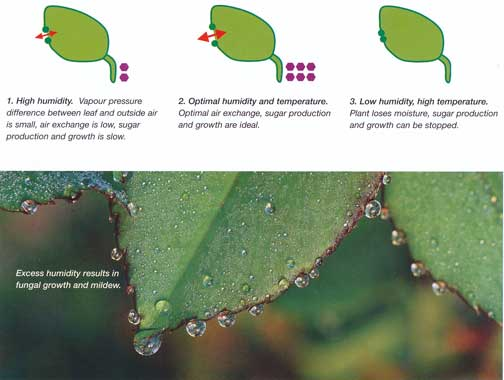 Illustration of leaves soaking in water