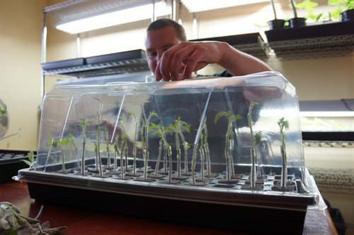 Complete propagation set up with plants inside