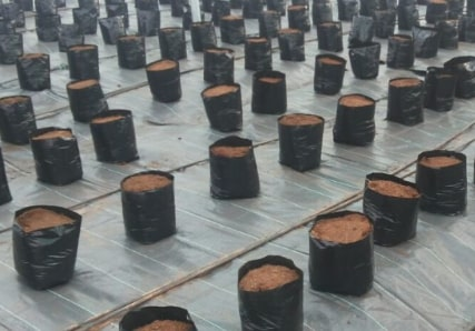 Lots of pots with soil on the ground of a large grow room