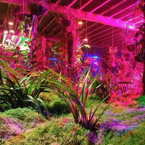 Large indoor grow room with lights hanging above plants