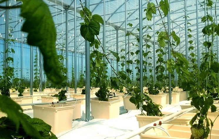 Warehouse full of large growing plants