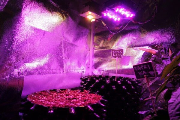 Micro growing with HID's
