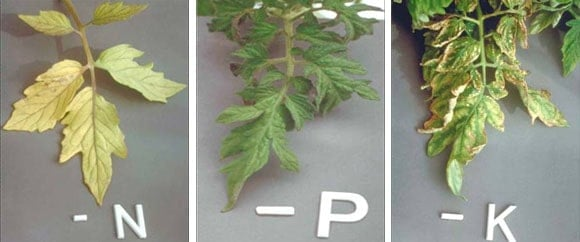 Plant leaves tested