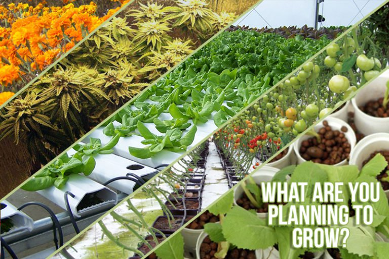 What are you planning to grow?