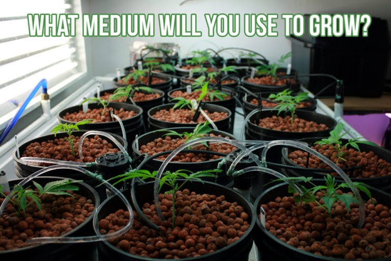What medium will you use to grow?
