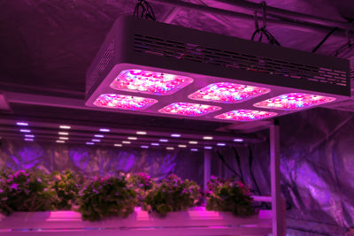 LED growing a crop of hydroponically grown plants.