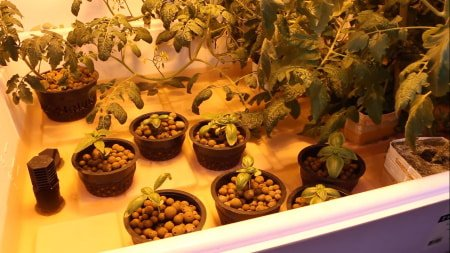 This is a picture of an ebb and flow flood table hydroponics system.