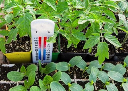 This is a picture of a grow room's climate and humidity being measured.