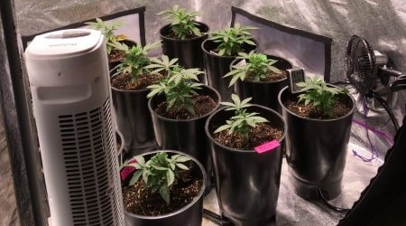 This picture shows an ebb and flow hydro grow tent setup. Photo: 420 Magazine