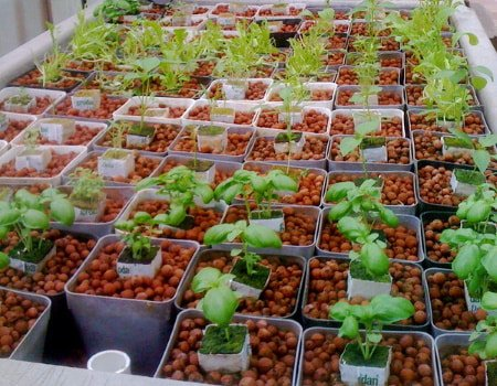 This image shows a large ebb and flow hydroponics growing operation.