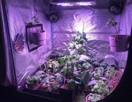 This is a picture of a grow tent equipped with fans for ventilation and odor control.