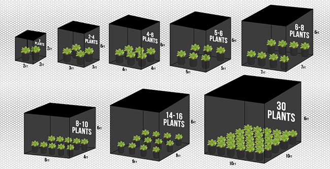 This is a comparison of grow tent sizes and how many plants can fit in each size.