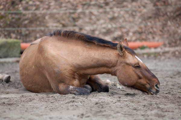Recognizing the Signs of Colic in Horses [What You Need to Know]