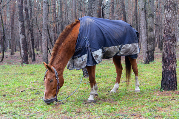 Horse Care in Summer and in Winter