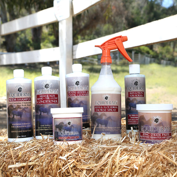 Equiderma royal spa grooming and treatment for horse skin condition treatment