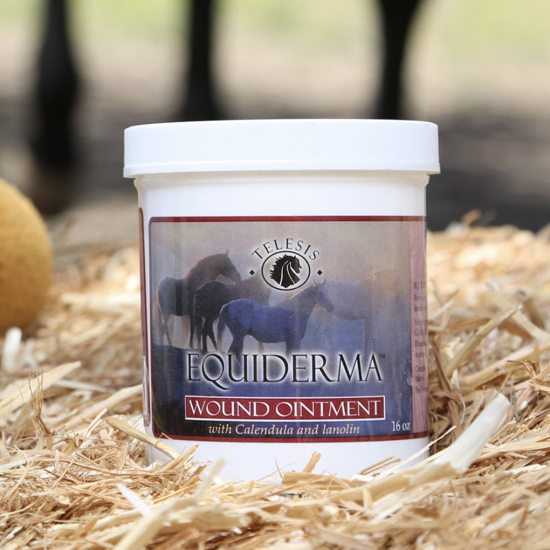 Equiderma: Calendula & Neem Wound Ointment For Horses - Equiderma | Natural Horse Care | Pet Care Products  - Equiderma