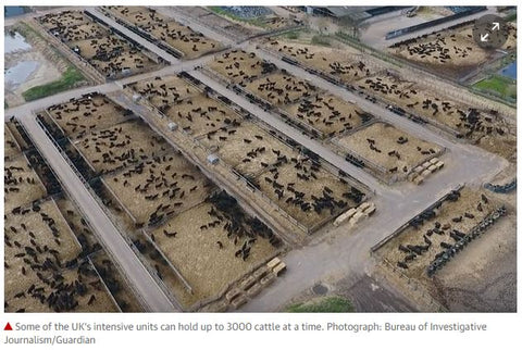 US beef feedlot from above