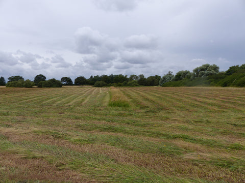 Uncut strips left for corncrakes to disperse before mowing the next day