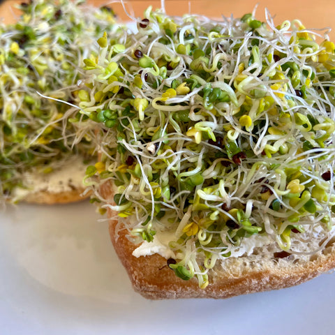 Broccoli sprouts ready to eat