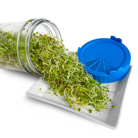 These alfalfa sprouts are ready to eat