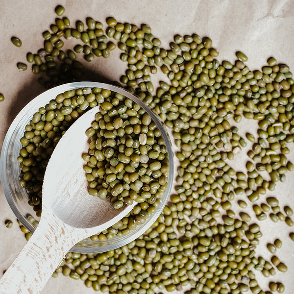 Mung bean seeds for sprouting area a beautiful shade of olive green
