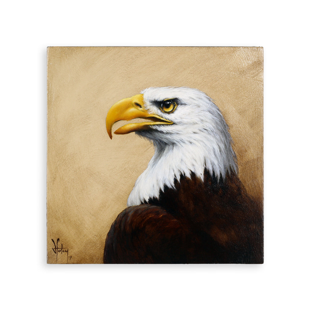 Vanessa Foley - Bald Eagle