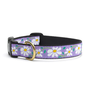 Daisy Dog Collars from Absolutely Animals
