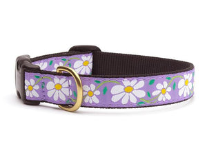 Daisy Teacup Collar and Lead Set