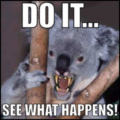 Mean Koala: DO IT SEE WHAT HAPPENS