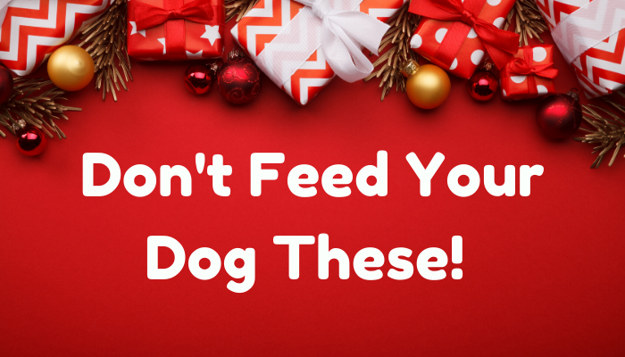 Don't Feed Your Dog These! 9 Toxic Foods To Avoid This Christmas