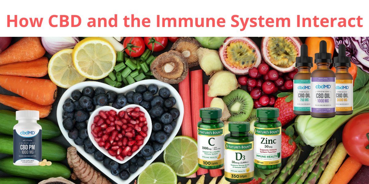 How CBD and the Immune System Interact for Covid