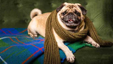 10 Tips to Take Care of Your Pooch During Winters
