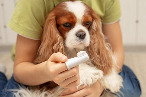 How to know if your pawpy is suffering from a dental problem: