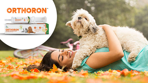 4 Ways To Keep Your Dog's Joints Healthy And Young