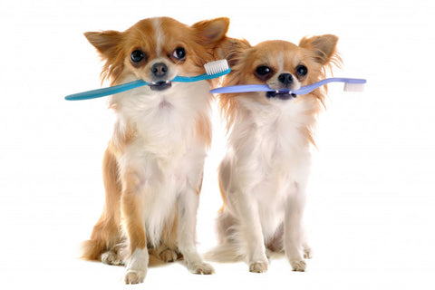 5 Effective Ways To Maintain Your Furry Babies Oral Health At Home