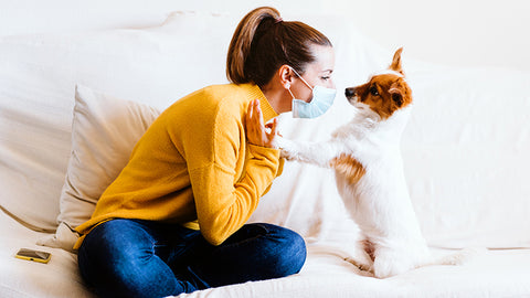 5 reasons why your dog is your best quarantine buddy: