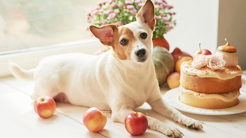 Toxic Food Guide For Pets: