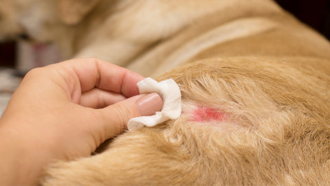 Topical remedies for cleaning dog wounds