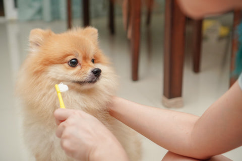 Get started early with your furry baby