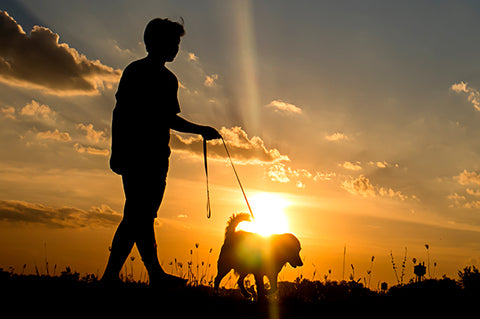 Walk your pet during cooler hours of the day