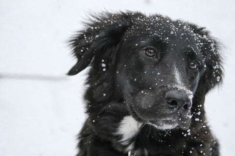 5 Tips For Winter Care for Your Dog