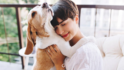 5 Tips to Keep your Pooch Smelling Fresh and Good All The Time
