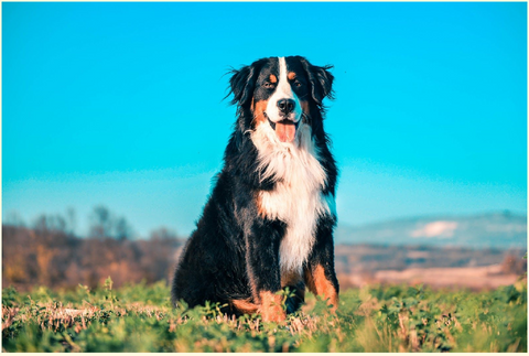Maintaining Healthy Skin and Coat of Dogs and Cats