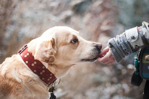 Healthy Diet for your Senior Dog