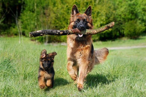Myth 3: Your Dog Must Stop Exercising!