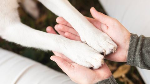 Things You Need to Know Before Adopting A Dog